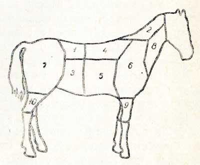 Схема разделки конской туши: 1
