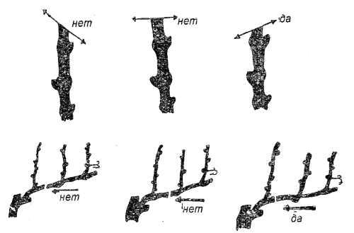 Техника обрезки побегов винограда