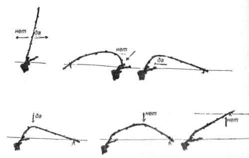 Способы подвязки плодовых стрелок при форме Гюйо